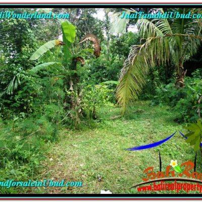 JUAL TANAH MURAH di UBUD 2,000 m2 di Ubud Tegalalang