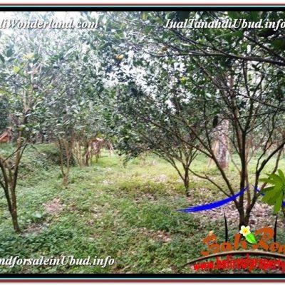 DIJUAL TANAH di UBUD BALI Untuk INVESTASI TJUB614