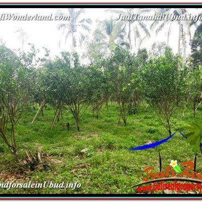 TANAH MURAH di UBUD BALI 1,000 m2 di Ubud Tegalalang