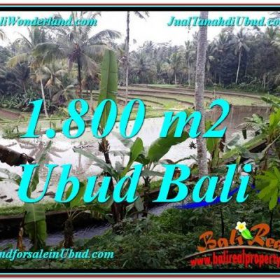 TANAH di UBUD BALI DIJUAL MURAH 18 Are di Ubud Tampak Siring