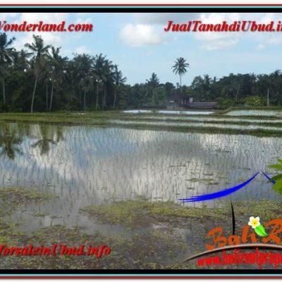 TANAH di UBUD DIJUAL 2,400 m2 di Ubud Pejeng