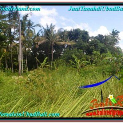 TANAH JUAL MURAH  UBUD 614 m2  View kebun lingkungan Villa