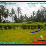 TANAH di UBUD DIJUAL MURAH 400 m2 di Ubud Pejeng