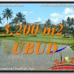 DIJUAL TANAH di UBUD 32 Are di Ubud Payangan