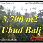 TANAH MURAH di UBUD BALI 3,700 m2 di Sentral / Ubud Center