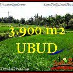 JUAL MURAH TANAH di UBUD 39 Are di Ubud Pejeng