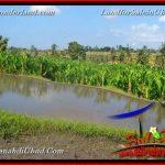 JUAL TANAH di UBUD BALI 4 Are di Ubud Gianyar