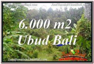 JUAL MURAH TANAH di UBUD BALI 60 Are VIEW SUNGAI DAN TEBING