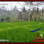 Dijual Murah Tanah di Ubud Bali 10,000 m2 di Ubud Tegalalang