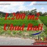 Dijual Murah Tanah di Ubud 1,200 m2 di Ubud Tampak Siring