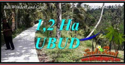 Dijual Murah Tanah di Ubud 12,000 m2 di Ubud Tegalalang