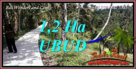 Tanah Dijual di Ubud Bali 120 Are di Ubud Tegalalang