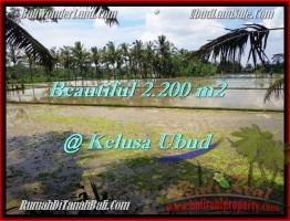 TANAH MURAH di UBUD DIJUAL 2,200 m2 di Ubud Payangan