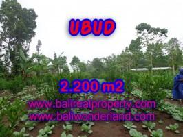 Tanah di Ubud dijual 22 Are di Ubud Tegalalang Bali