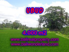 Tanah di Ubud dijual 40 Are view sawah dan gunung di Ubud Tegalalang