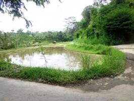 Jual tanah di Ubud Bali 17 Are di Ubud Tegalalang