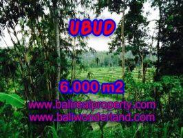 Jual tanah di Ubud Bali 60 Are di Dekat sentral Ubud