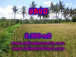 Tanah di Ubud Bali dijual 5.390 m2 View sawah dan sungai di Ubud Mas