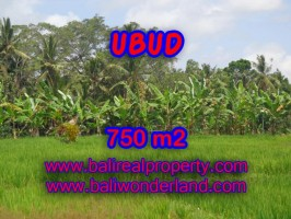Jual tanah di Bali murah sawah dan hutan di Dekat sentral Ubud