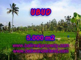 Jual tanah di Ubud view sawah dan tebing di Ubud Payangan Bali
