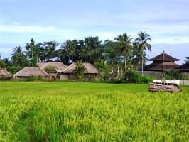 Tanah di Ubud Bali dijual View sawah dan Gunung Agung  murah di Dekat Ubud Center