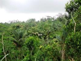 Tanah di Bali dijual murah 5.000 m2 di Ubud Tegalalang