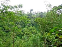 Tanah dijual di Ubud 5,000 m2 Tepi Sungai  di Ubud Tegalalang