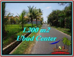 TANAH MURAH di UBUD BALI Untuk INVESTASI TJUB525
