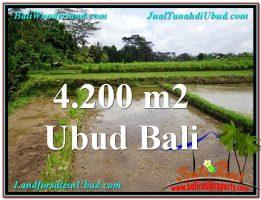 TANAH MURAH DIJUAL di UBUD BALI 4,200 m2 di Ubud Tampak Siring