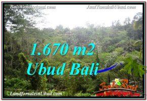 TANAH MURAH DIJUAL di UBUD BALI Untuk INVESTASI TJUB569