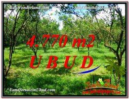 TANAH MURAH di UBUD BALI 4,770 m2  View kebun