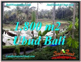 TANAH DIJUAL MURAH di UBUD 18 Are di Ubud Tampak Siring