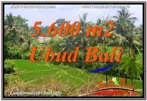 JUAL TANAH MURAH di UBUD 5,600 m2 View Sawah, Link. Villa