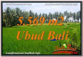 JUAL TANAH di UBUD BALI 5,569 m2  View Sawah dan Sungai Kecil
