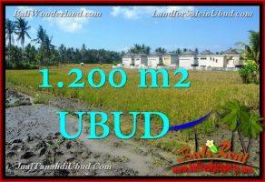 TANAH MURAH di UBUD BALI DIJUAL 12 Are di Sentral Ubud