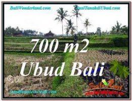 TANAH DIJUAL MURAH di UBUD BALI 7 Are di SENTRAL UBUD