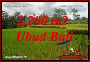 Tanah Dijual di Ubud 12 Are View sawah, lingkungan Villa