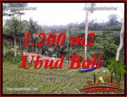 JUAL Murah Tanah di Ubud Bali 12 Are View sawah dan sungai