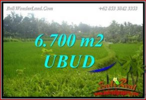 Tanah Murah  di Ubud Bali Dijual 67 Are View sawah lingk. villa