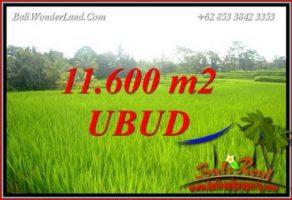 Tanah Murah di Ubud Bali Dijual 116 Are di Ubud Tegalalang